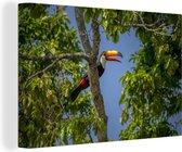 Reuzentoekan in een boom in Brazilië Canvas 90x60 cm - Foto print op Canvas schilderij (Wanddecoratie woonkamer / slaapkamer)