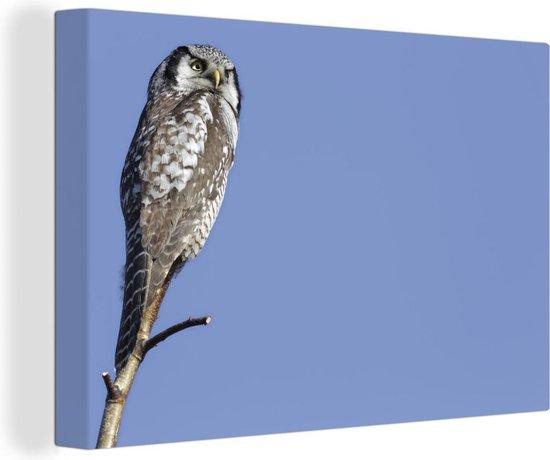 Sperweruil onder een helderblauwe hemel Canvas 140x90 cm - Foto print op Canvas schilderij (Wanddecoratie woonkamer / slaapkamer)