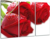 Glasschilderij Roos | Rood, Wit, Groen | 120x80cm 3Luik | Foto print op Glas |  F000668