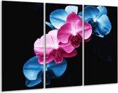 Canvas schilderij Tulp | Roze, Blauw, Zwart | 120x80cm 3Luik