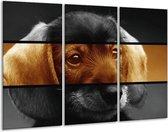 Canvas schilderij Hond | Sepia, Bruin | 120x80cm 3Luik