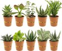 Find the perfect Succulent for you