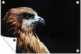 Close-up adelaar tegen zwarte achtergrond tuinposter los doek 120x80 cm - Tuindoek / Buitencanvas / Schilderijen voor buiten (tuin decoratie)