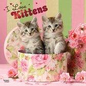 Kittens I Love Kalender 2021
