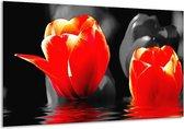 Glasschilderij Tulpen | Rood, Zwart, Grijs | 120x70cm 1Luik | Foto print op Glas |  F002894