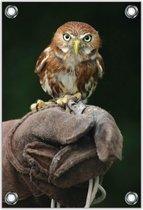 Tuinposter –Roofvogel op Mensenhand– 60x90  Foto op Tuinposter (wanddecoratie voor buiten en binnen)