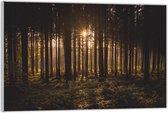 Plexiglas –Bomen met Mooie Zon– 60x40 (Wanddecoratie op Plexiglas)