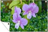Een close-up van orchideeën tuinposter 60x40 cm - klein - Tuindoek / Buitencanvas / Schilderijen voor buiten (tuin decoratie)