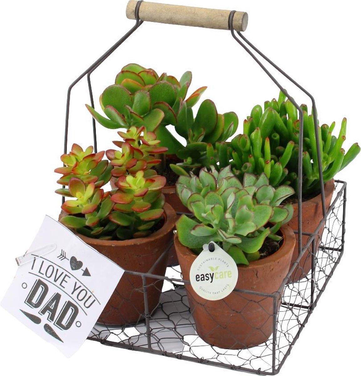 Vaderdag Geschenkset - Stoere Planten in Gereedschapskist - (Tip!: ideaal Vaderdag Cadeau of Cadeau voor Papa)