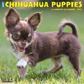 Just Chihuahua Puppies 2021 Wall Calendar (Dog Breed Calendar)