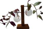De Stekjesboom Glazen Vaasjes t.b.v. Planten Stekken in water - Hydrocultuur - Hydroponie