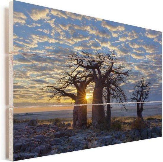 Zonsopgang in Botswana bij Afrikaanse baobab bomen onder een bewolkte lucht Vurenhout met planken 120x80 cm - Foto print op Hout (Wanddecoratie)
