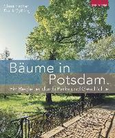 Bäume in Potsdam