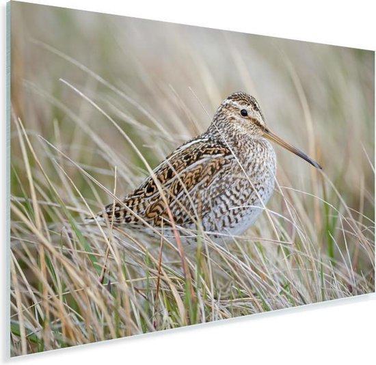 Een watersnip tussen het gras Plexiglas 180x120 cm - Foto print op Glas (Plexiglas wanddecoratie) XXL / Groot formaat!