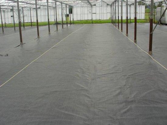 anti worteldoek , gronddoek , tentzeil bescherming 6 x 4.80 mtr / 130 gr p/m2 - totalflooring.nl
