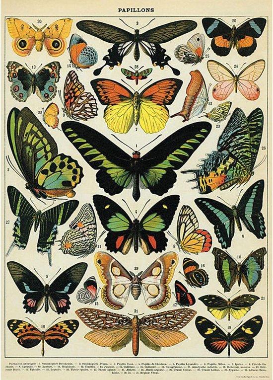 Poster Vlinders - Cavallini & Co - Vintage Butterflies