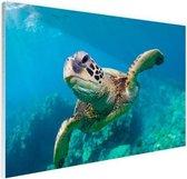 Zeeschildpad zwemmend in Hawai Glas 180x120 cm - Foto print op Glas (Plexiglas wanddecoratie) XXL / Groot formaat!