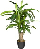 HTT Decorations – Kunstplant Dracaena Fragans H90cm