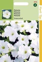 Petunia Hybride Bloemzaad -  Sneeuwbal