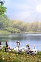 Wild Geese Notebook