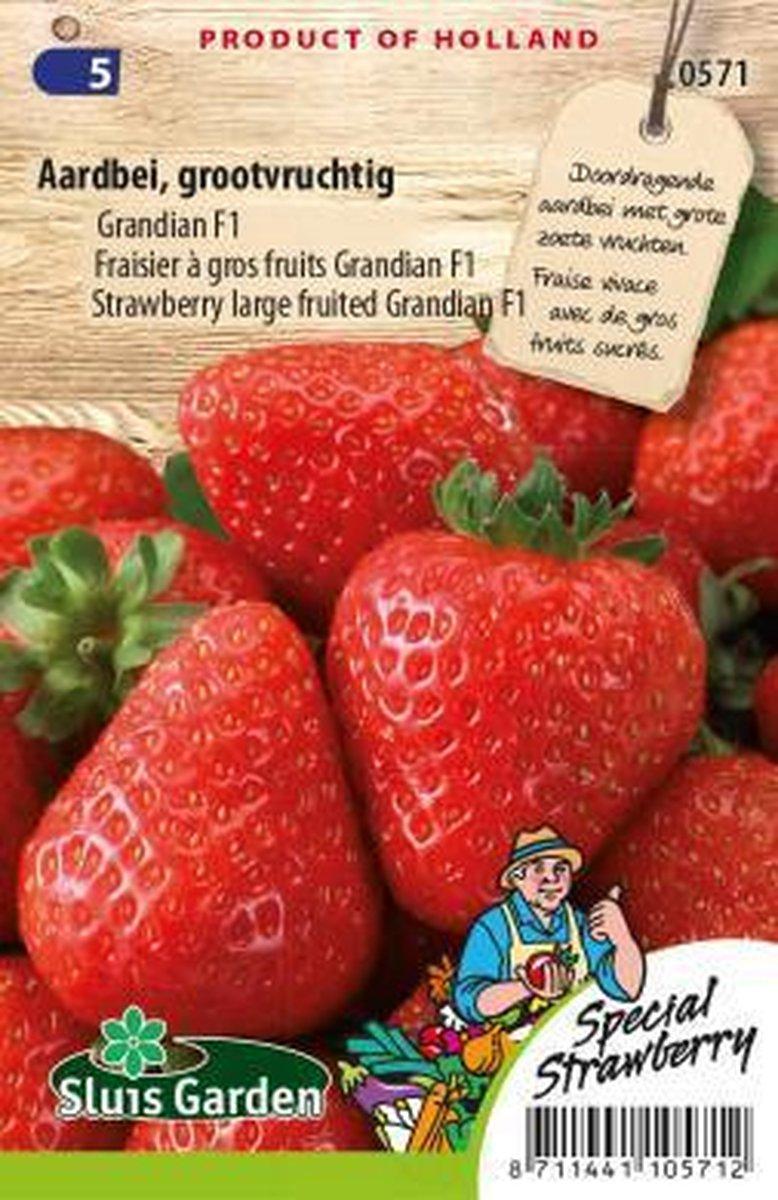 Sluis Garden - Aardbei Grandian F1