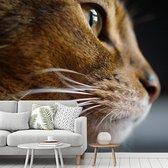 Fotobehang vinyl - Portret van een Abessijn kat van dichtbij breedte 355 cm x hoogte 320 cm - Foto print op behang (in 7 formaten beschikbaar)