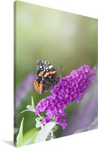 Close up van de vlinderstruik Canvas 60x90 cm - Foto print op Canvas schilderij (Wanddecoratie woonkamer / slaapkamer)