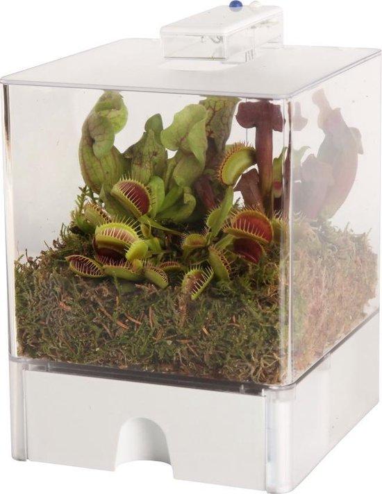 Swampworld Terrarium 3 vleesetende planten - 2 kleuren verlichting