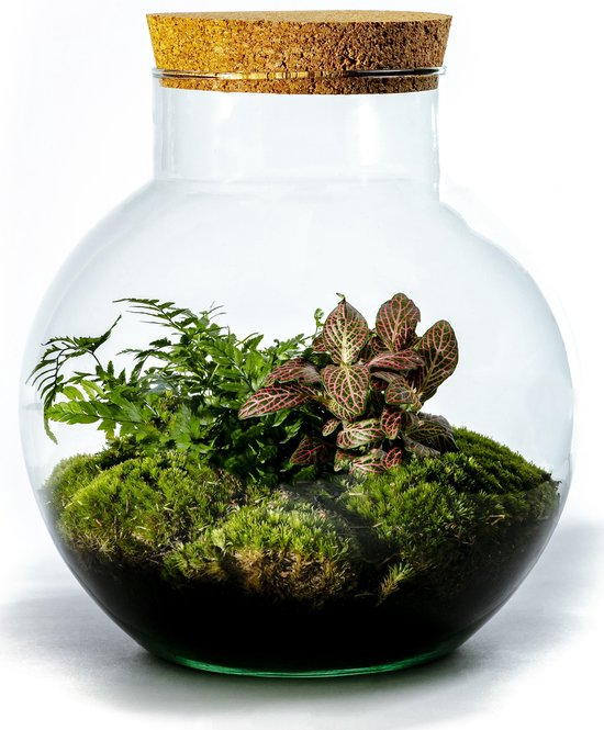 Growing Concepts DIY Duurzaam Ecosysteem Bol met Kurk - Botanische Mix - H30xØ18cm