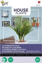 Buzzy Zaden - Kamerplant Californische Palm
