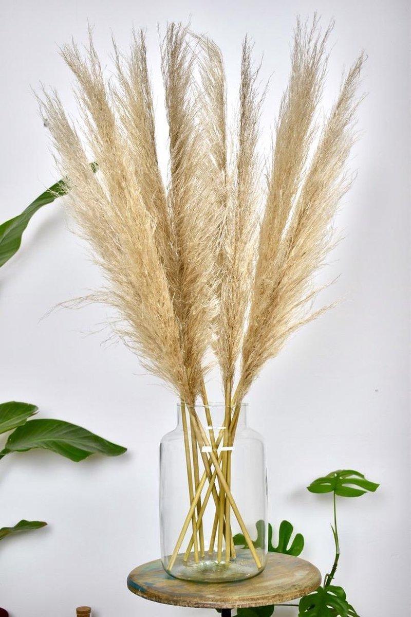 Natuurlijk Bloemen - Pampas pluimen 90 - 100 cm - Droogbloemen   7 stuks   Gedroogde bloemen