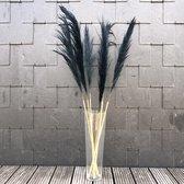 Pampas pluimen zwart | Cortaderia | 3 stuks | 100 cm | Droogbloemen