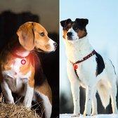 Professor Q - Verlichting Hond - Led Lampje Honden - Lampje Hondenhalsband - Honden Lampje Halsband - Hondenlampje - Rood