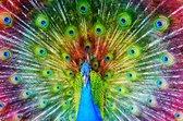 Nederlandse Productie │ Diamond Painting │ Pauw Kleurrijk │ Formaat 120 x 80 cm │ Diamond Painting Pakket Volwassen │ Volledige bedekking │ Vierkant │ Full │ Flitzz Diamond Painting