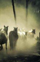 The Hacker-Proof Internet Address Password Book - Wild Horses