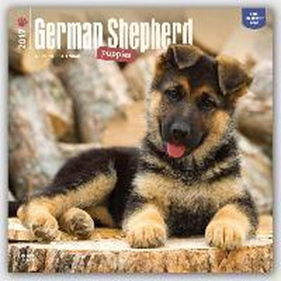 Browntrout Duitse Herder Puppies Kalender 2017