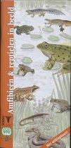 In beeld 8 - Amfibieen en reptielen in beeld