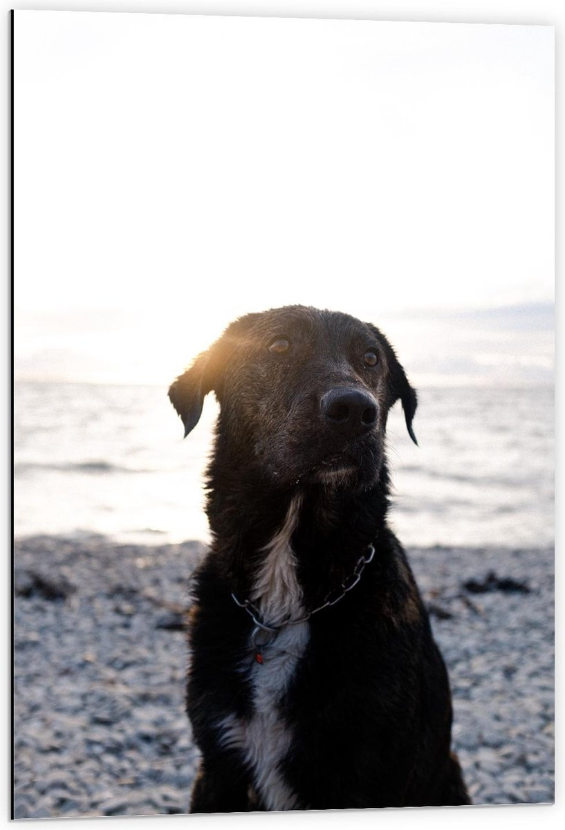 Dibond - Labrador op het Strand - 60x90cm Foto op Aluminium (Wanddecoratie van metaal)