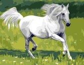 Eagle® Schilderen op Nummer Volwassenen - Wit Paard - Gespannen op Houten Frame - 50x40cm