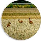 Forex Wandcirkel - Herten in het Wild - 40x40cm Foto op Wandcirkel (met ophangsysteem)