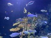 Terrarium of aquarium verlichting led. 21 stuks blauwe led. Lengte aquarium led lamp 38 cm.