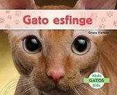 Gato Esfinge / Sphynx Cats