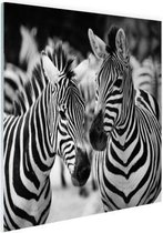 Zebra zwart wit Glas 30x20 cm - klein - Foto print op Glas (Plexiglas wanddecoratie)