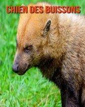 Chien des Buissons