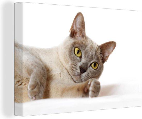 Geel gekleurde ogen van de Burmese kat Canvas 180x120 cm - Foto print op Canvas schilderij (Wanddecoratie woonkamer / slaapkamer) / Huisdieren Canvas Schilderijen XXL / Groot formaat!