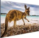 Wallaby op het strand Aluminium 90x60 cm - Foto print op Aluminium (metaal wanddecoratie)