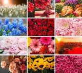 Cadeautip! | Luxe ansichtkaarten set Bloemen 10x15 cm | 24 stuks | Wenskaarten Bloemen