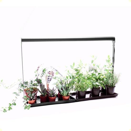 Led groeilamp voor kruiden en kamerplanten  - Bloom TableTop Model