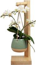 Orchidee | Trésor Pirouette Groen | Living Collection