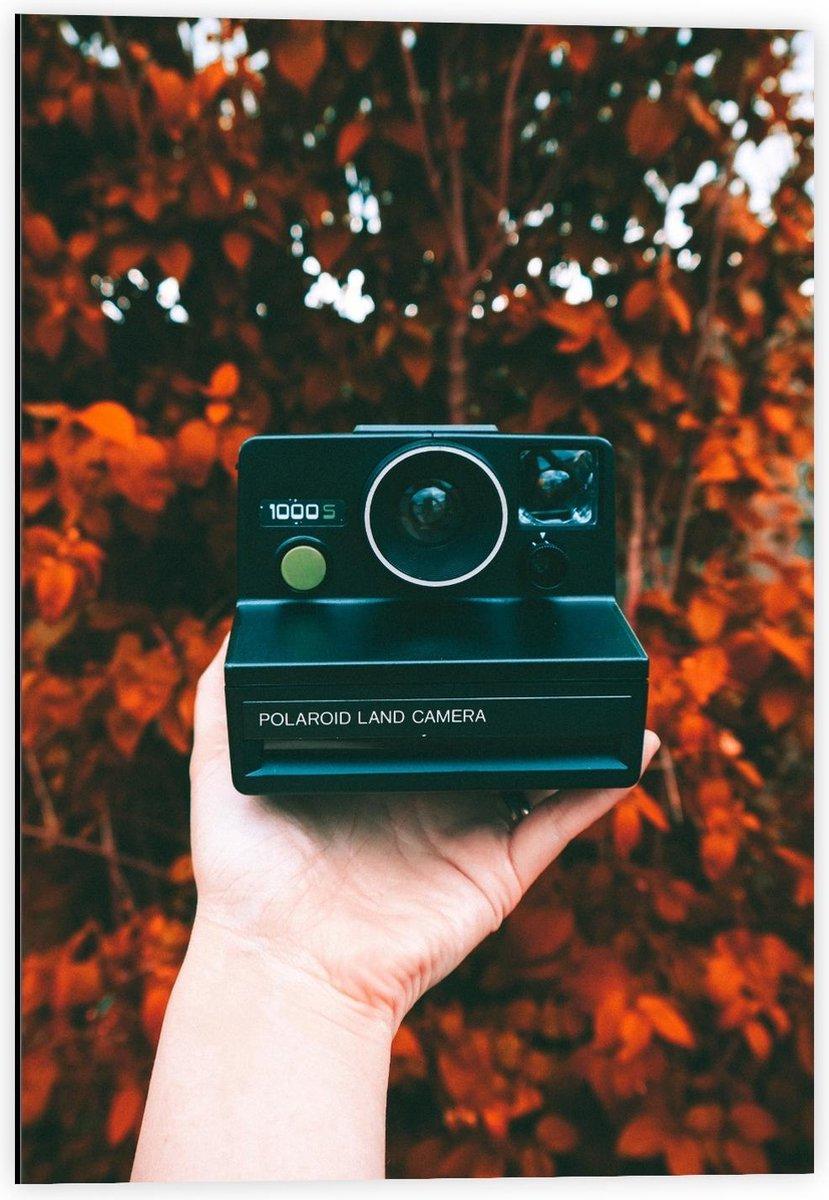 Dibond - Oude Polaroid Camera in Herfstbos - 40x60cm Foto op Aluminium (Met Ophangsysteem)